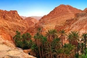 le palme di Douz, l'oasi più grande della Tunisia