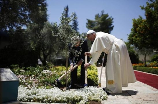 Papa Francisco e o presidente de Israel, Shimon Peres, plantam uma oliveira no jardim do palácio presidencial.