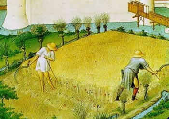 Parabola del grano e la zizzania8